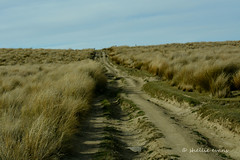 Road to the Serpentine, Rough Ridge, Central Otago Church, (flyingkiwigirl) Tags: road old lake church field gold mine dam farm central reserve 4wd historic ridge trail hut otago remote rough doc tussock oldest serpentine dunstan onslow poolburn manorburn oliveburn