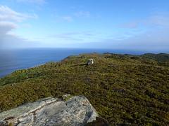View from Summit Rock (dracophylla) Tags: newzealand codfishisland whenauhoa