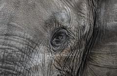 Elephant (Waleed Nabil) Tags: elephant nikon 70200