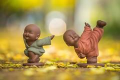 -  () - Kung fu kids - Falling Cassia Fistula - Golden shower tree - Xing Da Road, Taichung City (prince470701) Tags: taiwan kungfukids  sigma70300mm  goldenshowertree taichungcity   fallingcassiafistula sonya99 xingdaroad