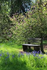 Woodland bench (Pat's_photos) Tags: bench westonbirt hbm