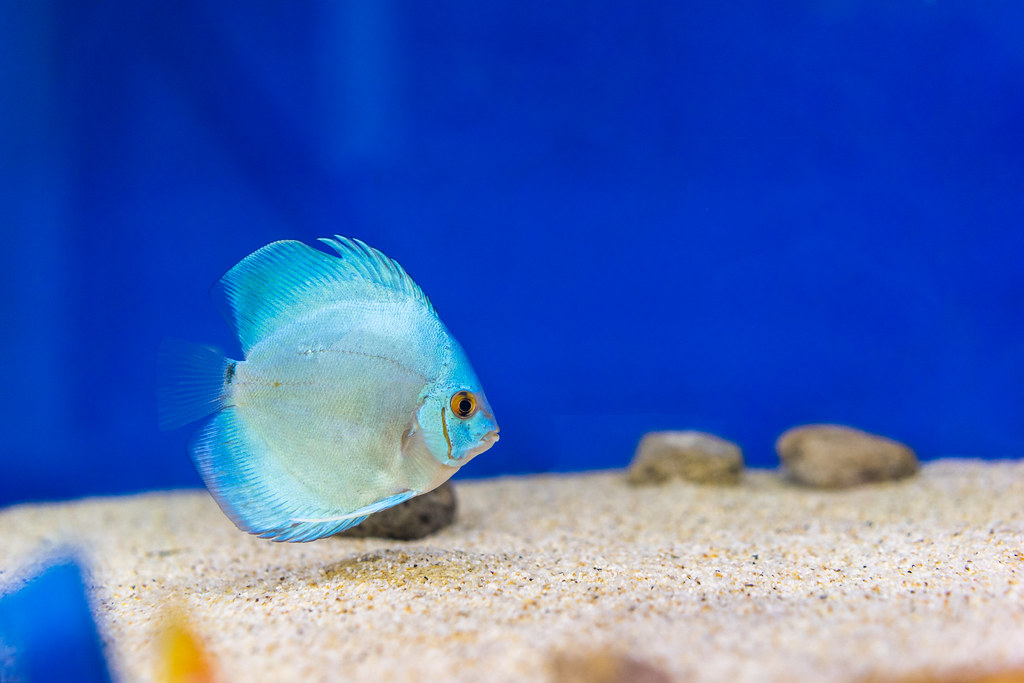 The world 39 s best photos of fresh and tank flickr hive mind for Yellow fish tank water