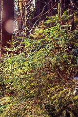Kyjovské údolí (trekkpics) Tags: city travel urban white holiday black mountains berg rock rural landscape schweiz dresden wasser czech outdoor urlaub pflanze tschechien tschechische republik czechmountains schloss bahn landschaft wald wandern elbe abstrakt deutsche felsen gebirge sächsische zamek děčín hory labe textur kraj einfarbig decin böhmische lausitzer české švýcarsko heiter dráhy vrch lužické chřibská studenec colourartaward ústecký chřibský