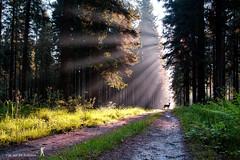 mirage ... (Mick Cam Photography) Tags: nature natural light sunlight canon mickcam