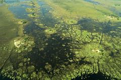 15-09-20 Ruta Okavango Botswana (108) R01 (Nikobo3) Tags: travel parque paisajes naturaleza color canon ngc delta unesco viajes botswana okavango vuelo twop frica vidasalvaje g7x omot deltadelokavango flickrtravelaward canong7x nikobo josgarcacobo todosloscomentarios