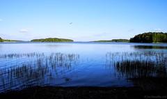 Archipelago blues (Joni Mansikka) Tags: trees sea summer seascape green nature suomi finland landscape outdoor bluesky balticsea shore archipelago tamronspaf2875mmf28xrdildasphericalif merimasku
