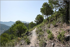 Pine Path (Mabacam) Tags: walking landscape outdoors countryside spain village view hiking country andalucia trail moorish vista 2016 salares pnes canillasdealbaida fogarate
