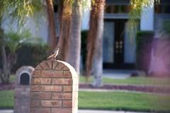 Bird On The Mailbox (Ean Dunagan) Tags: brick bird film birds bokeh bricks