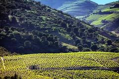 Near Banyuls, France (Tarasconnais) Tags: vineyards 5dsr 100400isii canon france