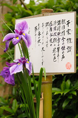 20160528-D7-DS7_3047.jpg (d3_plus) Tags: street sky plant flower building history nature japan temple nikon scenery shrine kamakura daily architectural telephoto bloom  tele streetphoto nikkor   tamron    shintoshrine  buddhisttemple dailyphoto sanctuary 28300mm   thesedays kitakamakura   28300     holyplace historicmonuments tamron28300mm  ancientcity   tamronaf28300mmf3563    a061  architecturalstructure telezoomlens d700  tamronaf28300mmf3563xrdildasphericalif nikond700   a061n