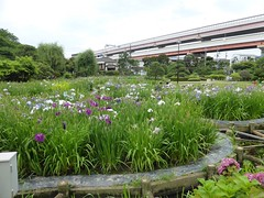Horikiri Iris Park (Stop carbon pollution) Tags: fb flickr japan  kantou