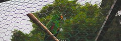 I n t o T he W i l d . (Daniele Paderi) Tags: bear park pink wild people italy pet elephant blur tree green bird love nature animals train children photography zoo penguin monkey spring colorful child eagle wildlife tiger flamingo parrot peacock ostrich leon owl lover puma savage cornelle