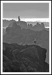 Legs Up (kyteman) Tags: california bird coast blackwhite rocks pacificgrove ptpinos