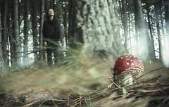 Me entrego aos msticos ciclos do universo (Tuane Eggers) Tags: film 35mm natural natureza fungi cogumelo amanita ciclo feminino fungos misticismo mstico tuaneeggers giuliages