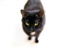 Cheshire cat bokeh (Arutemu) Tags: pet pets animal animals cat canon 50mm feline dof bokeh f14 kitty sigma shelter    6d   sigma50mm  eos6d canon6d  sigmaart sigma50mmf14dghsmart
