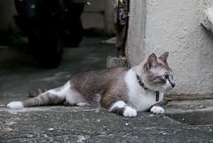 160605 - Blue eyes (y_leong23) Tags: cat dlux