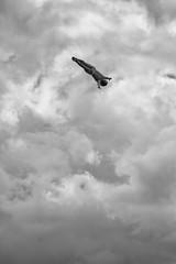 DSC_9728-Edit-3 (MY2200) Tags: cliff fall clouds copenhagen jump nikon opera air free diving redbull intheair operaen redbullcliffdive