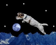 Dog jumps over the moon (deepchi1) Tags: dog jackrussell terrier jump moon mountain