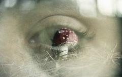 Sobre a simbiose entre os seres e os sonhos (Tuane Eggers) Tags: film 35mm olhar surreal fantasia olho cogumelo humanos sonhos seres fungo imaginao simbiose tuaneeggers giuliages