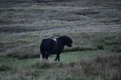 198_Eshaness (monika & manfred) Tags: nature scotland rocks wind hike mm surroundings shetlands eshaness shetlandislands shetlandisles drinkinghorse holidays3