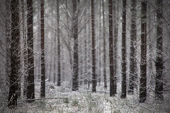 In The Winter Forest || CENTRAL TABLELANDS || NSW (rhyspope) Tags: new winter white snow pope cold tree ice wales forest canon woods south central australia nsw 5d aussie hampton rhys oberon mkii tablelands jenolan rhyspope