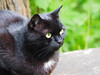 Juni Baden bei Wien (arjuna_zbycho) Tags: pet cats pets cute animal animals cat blackcat kitten feline chat kitty kittens tuxedo gato tuxedocat gatto katzen haustier kater tier gattini hauskatze kocio