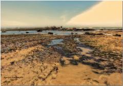 Tide Pools (MyRidgebacks - Sharon C Johnson) Tags: ca tidepools rossbeach halfmoonbeach sharoncjohnsonphotography