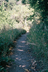 (Greg.the.Great) Tags: plants nature 35mm berkeley nikon hiking superia 400 fujifilm paths 50mmf18 xtra grizzlypeak nikonem seriese
