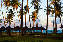 Palms and Sun (Jorge Hamilton) Tags: bahia brasil brazil praia do forte arco ris rainbow lua luar farol beach moolight jorgehamilton brandao brando