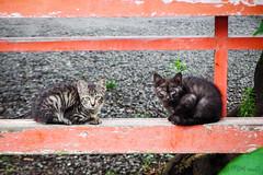 Today's Cat@2016-07-16 (masatsu) Tags: cat pentax catspotting mx1 thebiggestgroupwithonlycats