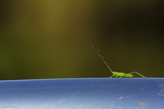 _MG_7873 PS (jaquelina.bisquert) Tags: detalle verde insecto macrofotografa