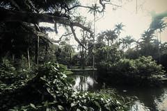 Parque Municipal- Belo Horizonte (Johnny Photofucker) Tags: park parque parco verde green wideangle belohorizonte parc bh vegetao lightroom grandeangular parquemunicipal