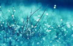 Rainfall (Charlotte G Photography) Tags: