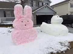 Artifical Turf (lawnpros) Tags: colorado happyeaster snowbunny lawnpros