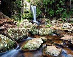Curtis Falls, Mt Tamborine. (Lazy Win) Tags: australianlandscape landscape omd em5m2 olympus goldcoasthinterland waterfall curtisfalls mttamborine goldcoast
