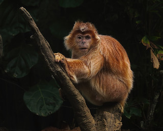 Surviving  (Langur monkey)  (Explored)
