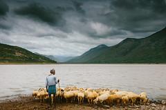 The shepherd (Joseph D'Mello) Tags: people india canon landscapes shepherd karnataka sheeps kollegala gundaldam