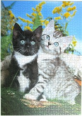 Peterchen und Katti / Pete and Katti (Leonisha) Tags: cat chat kittens puzzle katze jigsawpuzzle ktzchen