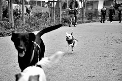 Run like hell (pieroemme) Tags: bw dog art animal nikon run flikr stree streetphotograpy 18140 d7100