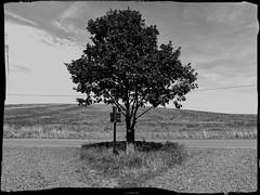 Einsamer Baum | Lone Tree (Andr-DD) Tags: road sign germany deutschland saxony sachsen baum schsischeschweiz wegweiser saxonswitzerland gabelung strase