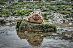 XP022204_AuroraHDR_HDR-FB (NPW Photography) Tags: beach turtle nigel leysdown isleofsheppy coconutturtle nigelwhealphotography