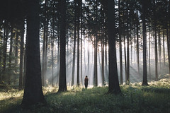 Lost in the forest (Bokehm0n) Tags: wood travel sun mist tree nature weather fog pine rural sunrise canon germany landscape outdoors dawn flickr moody folk earth fair explore evergreen environment 500px vsco vscofilm