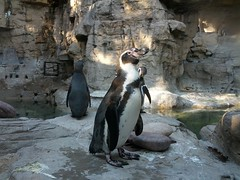 2012-09-29 16.50.21 (lyallcooper) Tags: animal zoo puffin