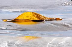 Seaweed (stephencurtin) Tags: california park seaweed beach strand bay state morro thechallengefactory