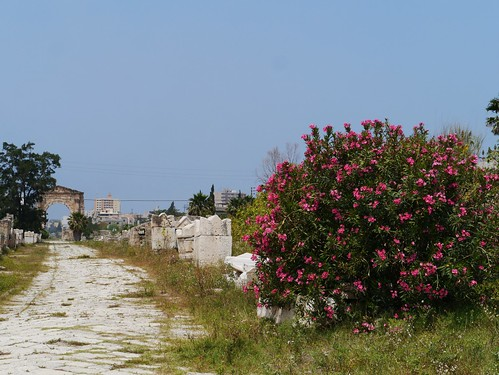 The Necropolis at the  Al Bass Archaeological Site, Tyre