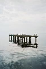 (Sasha Kurmaz) Tags: sea sky seagulls nature birds port landscape horizon