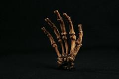 Hominid_Australopithecus_sebida_MH_2-articulat...