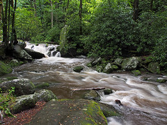 IMGPG15634 - Great Smoky Mountains National Park - Roaring Fork (David L. Black) Tags: nationalparks greatsmokymountainsnationalpark
