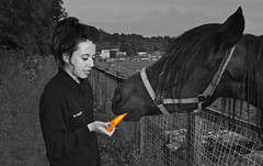 Carrot for the Horse. (CWhatPhotos) Tags: pictures above horse orange color colour animal animals by canon that lens eos photo foto with view feeding zoom photos eating picture taken selection using have photographs photograph adobe 7d carrot feed dslr 1740mm lightroom filly lseries cwhatphotos