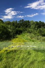 2013:365:192 (Lisa-S) Tags: park blue trees summer sky ontario canada grass clouds lisas 365 brampton day192 9340 day192365 3652013 365the2013edition copyright2013lisastokes 11jul13